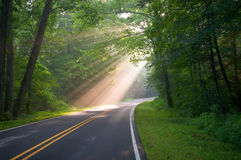 Forest Road Sun Beams and Rays. Road through forest with light beams and sun rays through green trees royalty free stock images