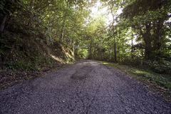 Forest road Royalty Free Stock Photography
