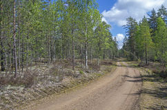 Forest road. Sunny day in June. Royalty Free Stock Photography