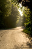 Forest road in the sunset. Asphalt road in the sunset golden light Royalty Free Stock Images