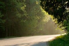 Forest road in the sunset. Asphalt road in the sunset golden light Stock Images