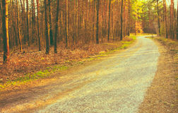 Forest Road Sunset Sunbeams Royalty Free Stock Images