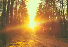 Forest road sunset sunbeams Stock Photos