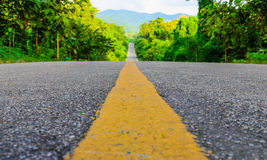 Forest road surface Royalty Free Stock Image