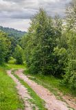Forest road among tall trees with green foliage. Beautiful nature scenery in summer Royalty Free Stock Image