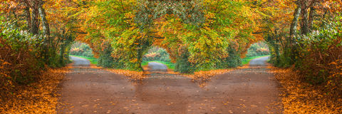 Forest road with three different ways Stock Photos