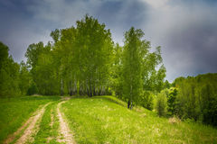 Forest road to birch grove. Stock Photos