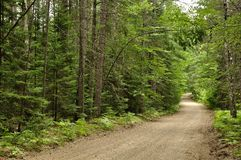 Forest road to rustic campsite Stock Photos