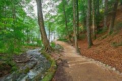 Forest Road Trail dans Plitvice, Croatie image stock