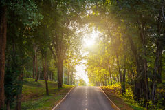 forest road trees along at the country side in thailand Stock Photography