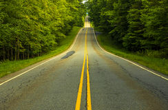 Forest road. Trees along the country site stock photography