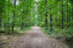 Forest road. And trees near Royalty Free Stock Photography