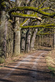 Forest road and trees Royalty Free Stock Images