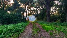Forest Road photographie stock libre de droits