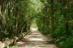 Forest road. Unpaved forest road in summer Royalty Free Stock Image