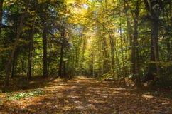 Forest Road vacío en otoño Fotos de archivo