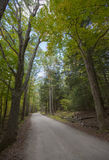 Forest road, Vermont, USA Stock Photography
