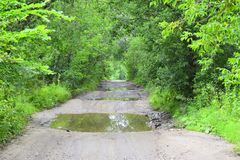 Forest road, the water reflects the sky foliage of trees. Very beautiful green summer forest and dirt road stock photos