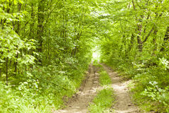 Forest road in wild nature Royalty Free Stock Image