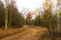 Forest road winds among the trees in the forest. At fall Royalty Free Stock Images