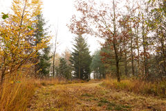 Forest road winds among the trees in the forest. At fall with golden leaves on trees and forest floor Stock Photo