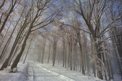 Forest road in winter. Forest road in the fog and snow in winter Royalty Free Stock Photography