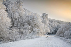 Forest road in winter. Forest road and sunrise in winter Stock Images