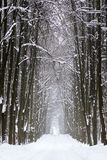 Forest road in winter Royalty Free Stock Photo