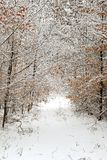 Forest Road in Winter. Road through a snow covered forest stock photos