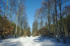 Forest road winter Royalty Free Stock Image