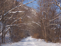 Forest road in the winter afternoon Stock Photography