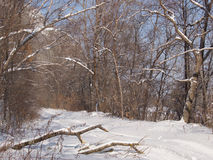 Forest road in the winter afternoon Royalty Free Stock Images