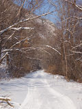 Forest road in the winter afternoon Stock Photos