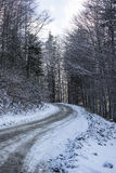 Forest road in winter Royalty Free Stock Images