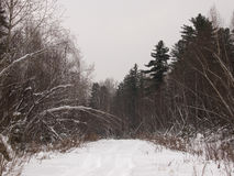 Forest road in the winter evening Stock Photography