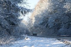 Forest road in the winter Royalty Free Stock Image