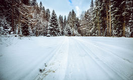 Forest road in winter Stock Photos