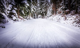 Forest road in winter Stock Image