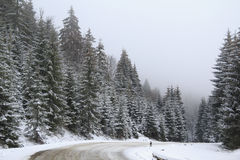 Forest Road Winter Landscape Stock Photography