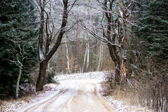 Forest road in winter. Outdoor frosted trees and grass Royalty Free Stock Photography