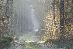 Forest road in the winter scenery Stock Photos