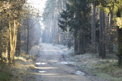 Forest road in the winter scenery Royalty Free Stock Image