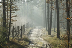 Forest road in the winter scenery Royalty Free Stock Photo