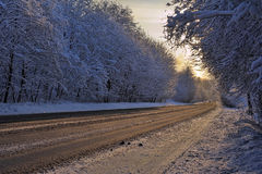 The forest road in winter Royalty Free Stock Photo