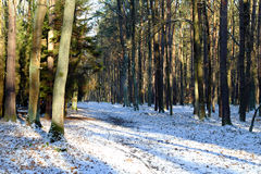 Forest road in winter with snow Stock Photography