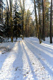 Forest road in winter with snow Royalty Free Stock Image