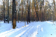 Forest road in winter with snow Royalty Free Stock Photo