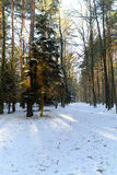 Forest road in winter with snow Stock Photos