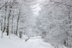 Forest road in winter 3 Royalty Free Stock Image