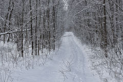 Forest road through the winter woods Stock Photography